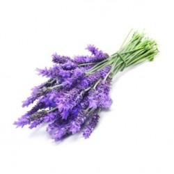 Lavender (FlavourArt)