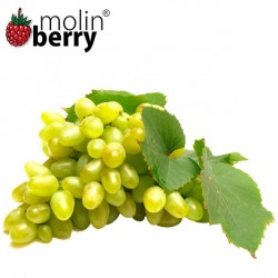 Queen Grapes (Molinberry)