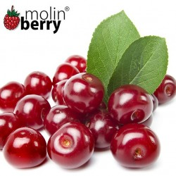 Red Cherry (Molinberry)